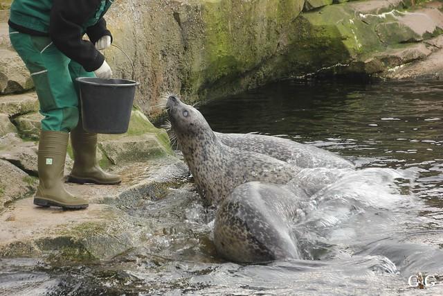 Zoo Bremerhaven 09.04.16 2.Teil31
