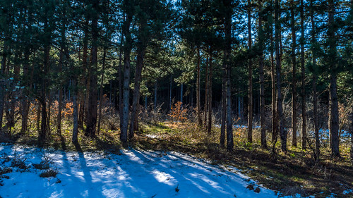 trees winter sun snow clouds landscape view pineforest