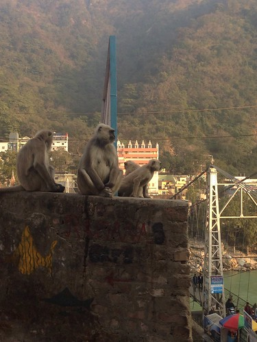 Laxman Jhula Monkeys