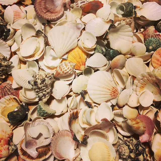 Sifting through shells
