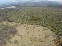 starr-090413-5914-Lapsana_communis-habitat-Ukulele-Maui