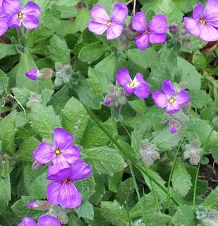 Season of purple