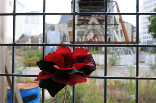 Rose, ChristChurch Cathedral