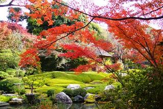 Taizo-in, Yoko-en (Garden) -2 (November 2011)