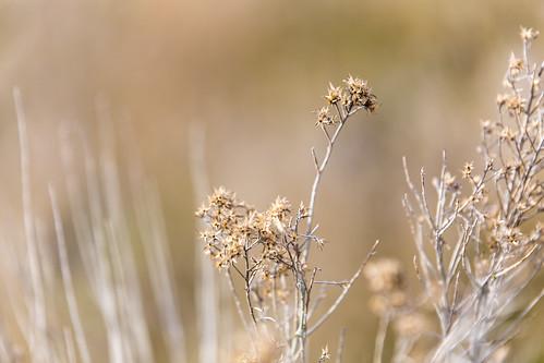 winter desert sagebrush desertflora canon6d tamron70200f28