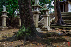 Photo:「The Roots Of Trees」猪名野神社 - 兵庫 By snakecats