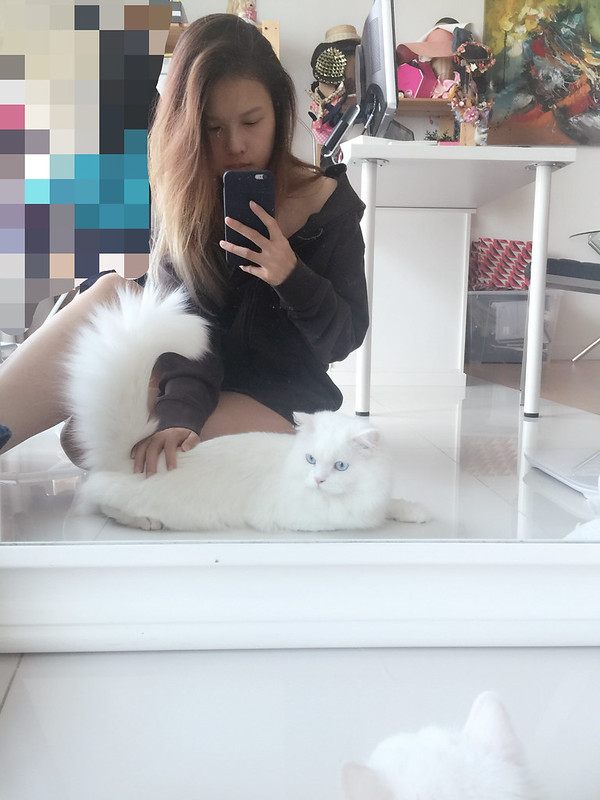 Afternoon with miruku #ragdoll