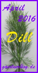 Garten-Koch-Event April: Dill [30.04.2016]