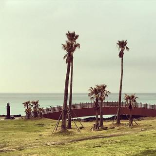 Bild av Hamdeok Seoubong Beach (함덕서우봉해변) Hamdeok Beach. valencia square squareformat iphoneography instagramapp uploaded:by=instagram