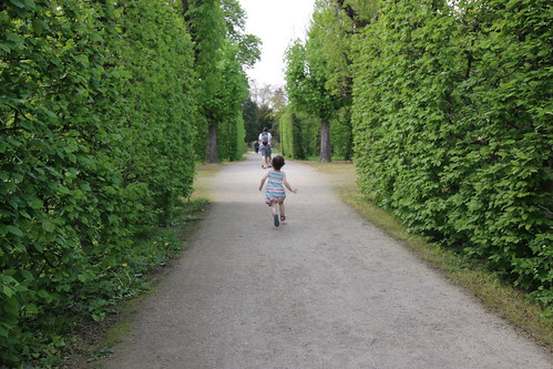 Schoenbrunn: lost in the hedgerows