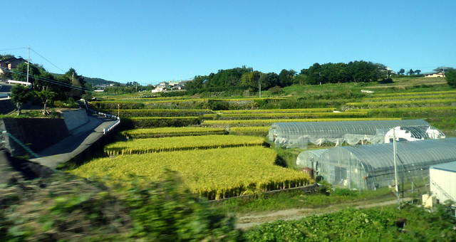 Stepped rice fields, Kyushu