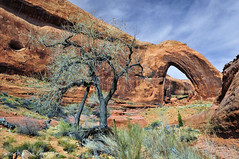 Broken Bow Arch near Escalante UT