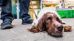Bacon King Of Brighton