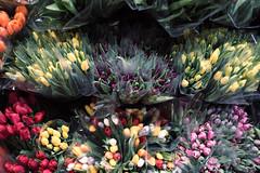2678 Tulips