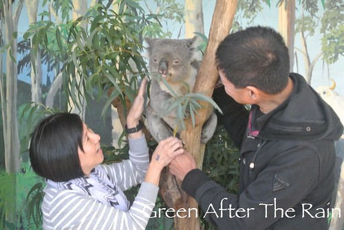 150911g Phillip Island Maru Koala and Animal Park _006