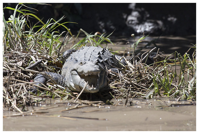 2016-02-16 Rl Viejo Wetlands 6