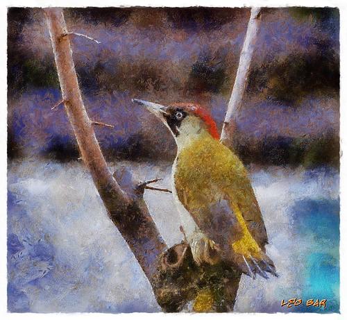 Woodpecker II - Picus viridis