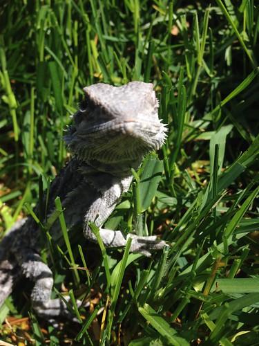 Critter enjoying the sun