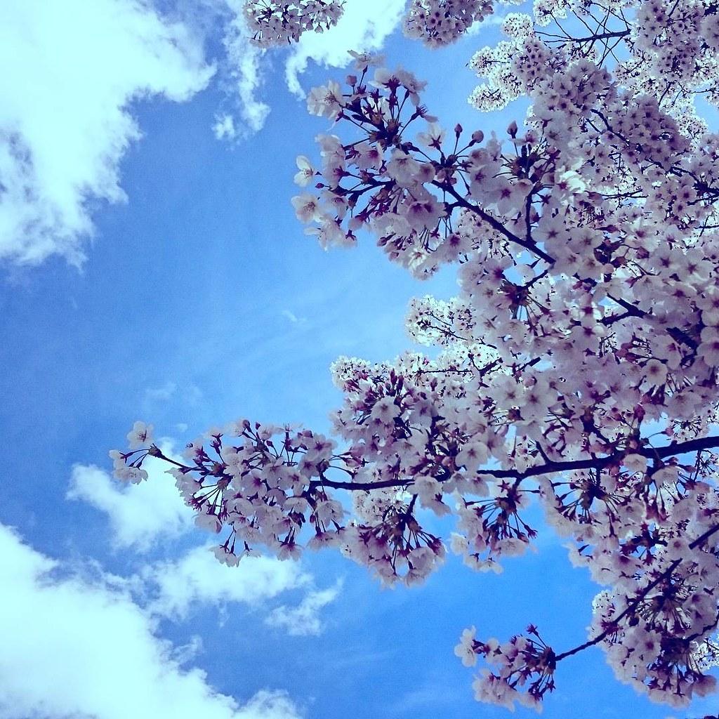 ¡¡Viva la primavera!! #igers_nature #igers_spain #cherryblossom #spring #edit #igers_madrid #imagegram #shutterbeasts #flower #cerezo #flordecerezo #