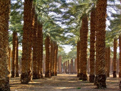 plant tree kibbutz