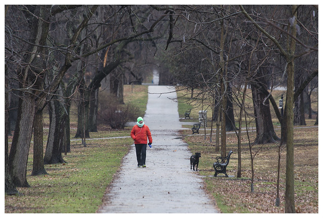 Dog Walker, Tower Grove Park