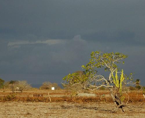 Chuva chegando - Ouro Branco AL