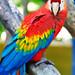 Guyana Zoo Jan 2016 #27