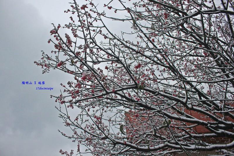 2016-台北陽明山-瑞雪-難得一見的雪白山景-17度C隨拍 (36)