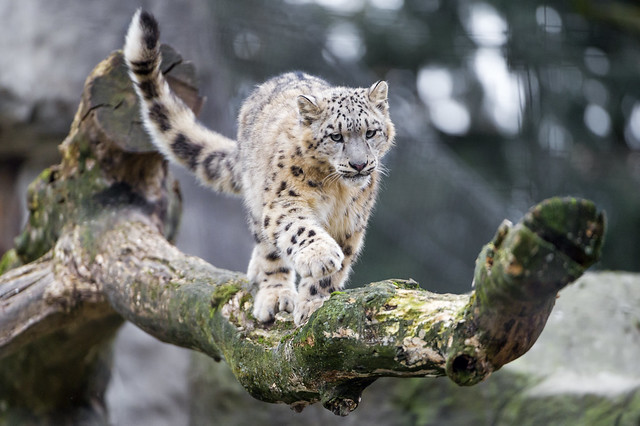 Balancing on the branch