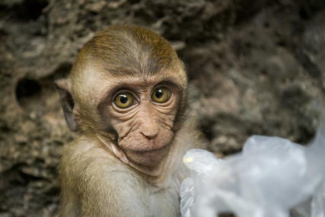 Monkey Offering Trash