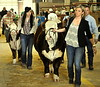 Ready for show, Fort Worth Stock Show, Jan. 31, 2016