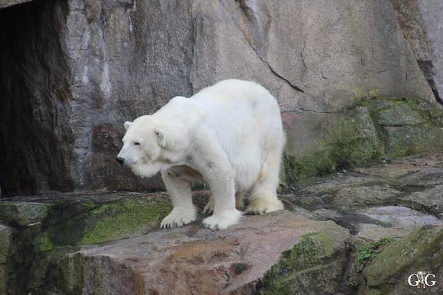 Zoo Berlin 31.01.20161