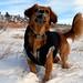 MIN 299_Snow-Catching Dog_Wait