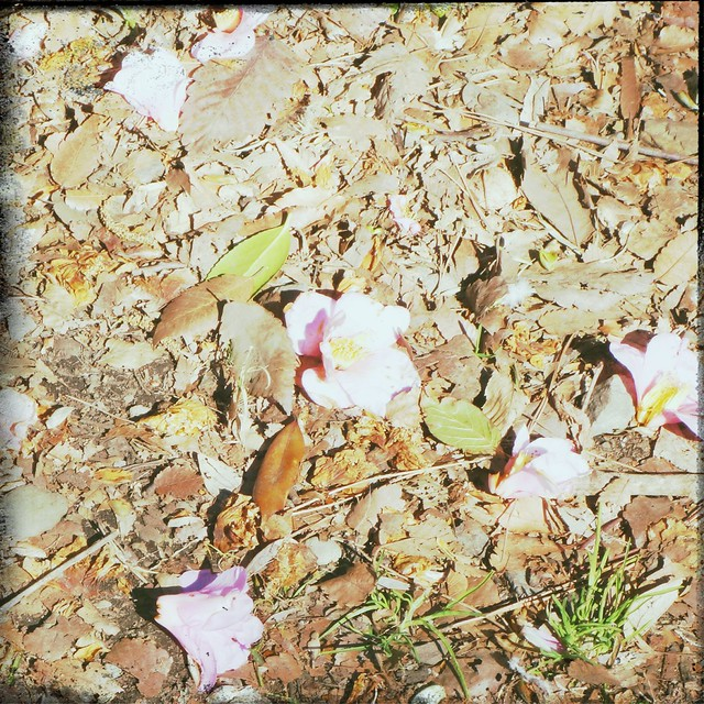 Flowers on the dry leaves ground