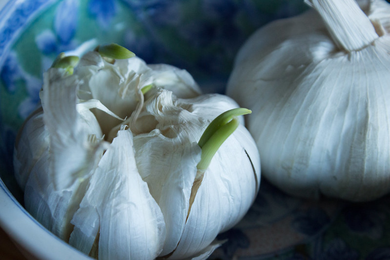 Garlic in a window