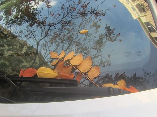 Coche guardando hojas