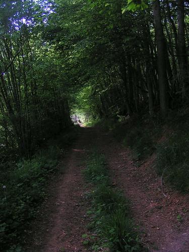 20080511 20990 0901 Jakobus Wald Weg Durchblick