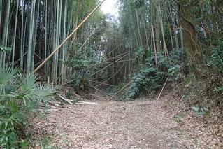 成田市の野毛平切通し3