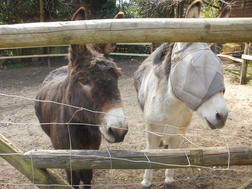 Donkeys at the Donkey pub