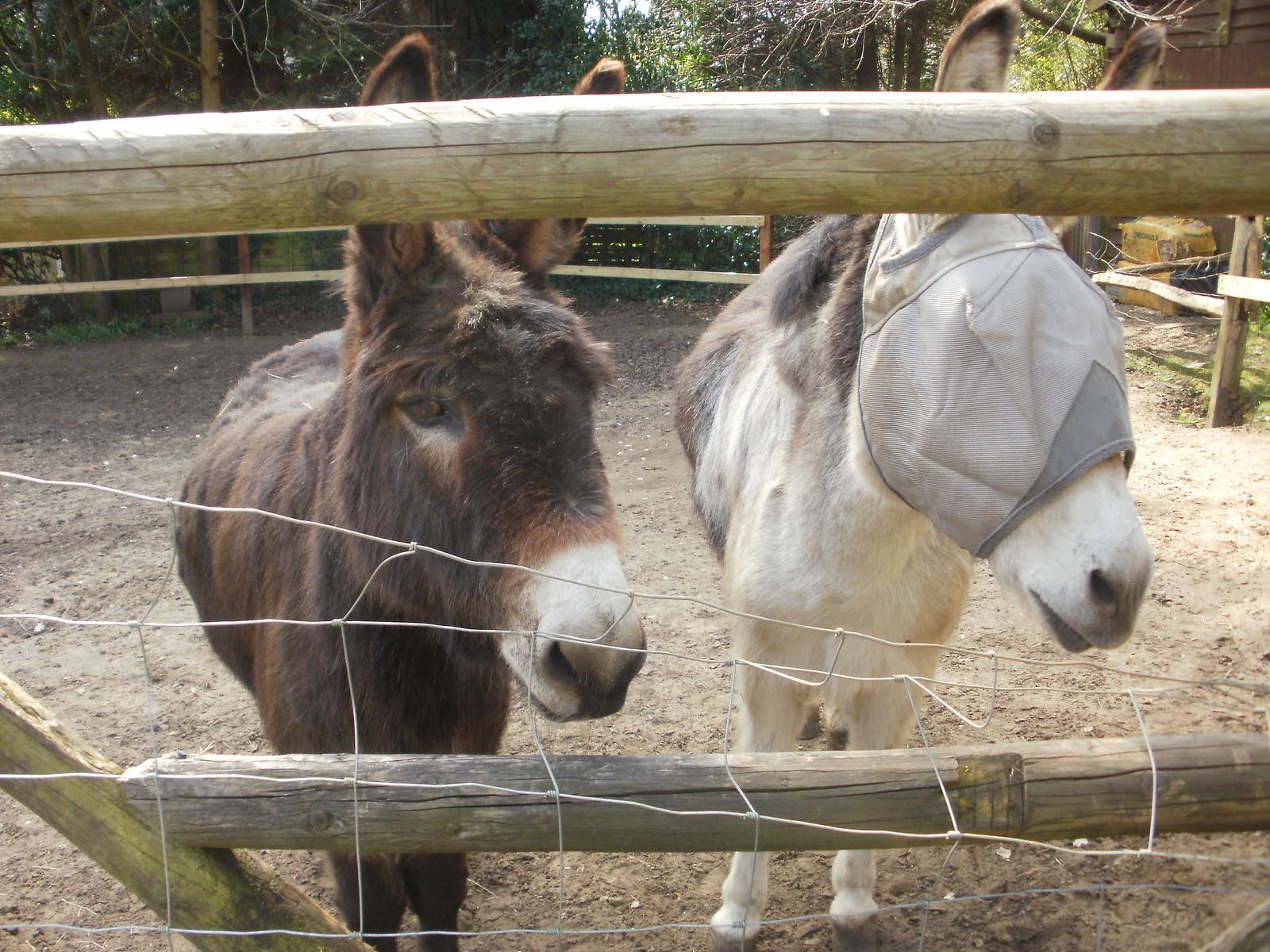 Donkeys at the Donkey pub OLYMPUS DIGITAL CAMERA