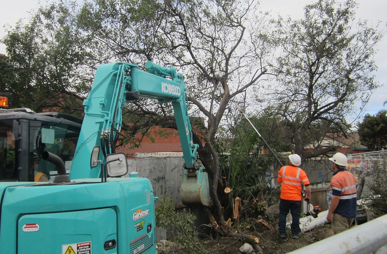 Tree removal for level crossing removal works