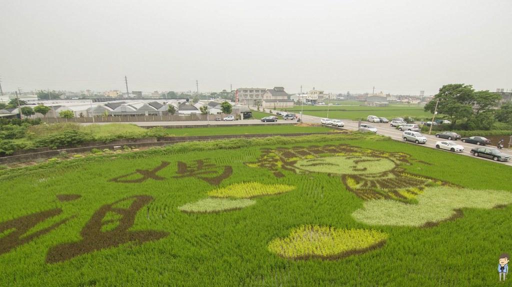苑裡彩繪稻田 (1)