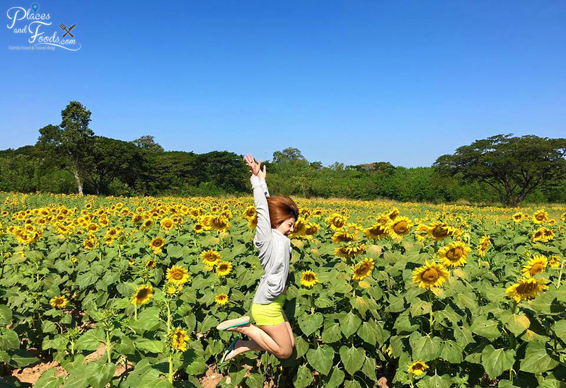 muak lek sunflower field jump shot janet