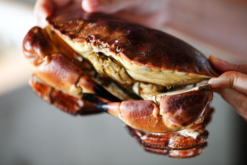 Live Brown Crab