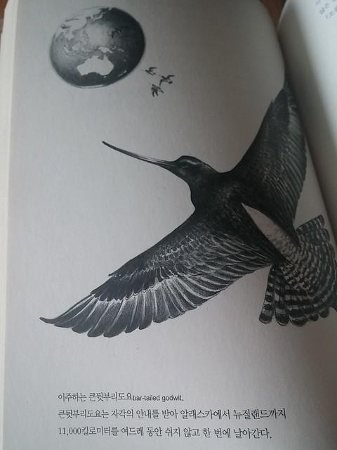 독서노트-새의 감각
