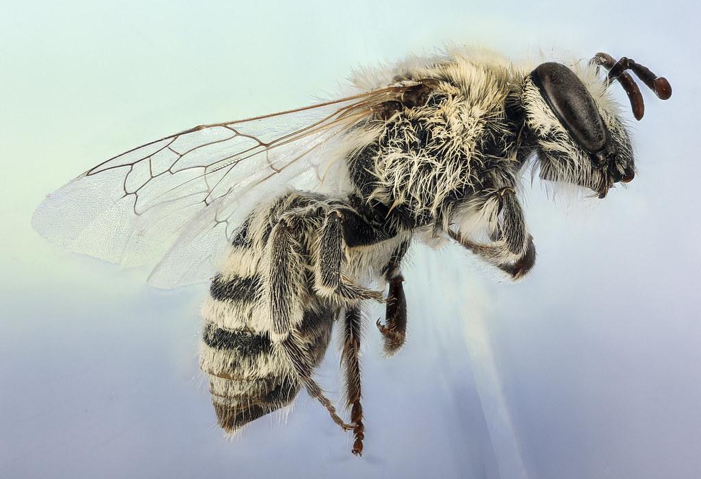 Winter Bee