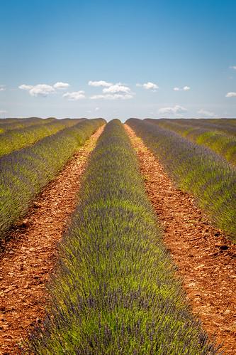 france green nature field clouds fleurs champs lavender vert paca provence nuage paysage lavande couleur plantes cielbleu valensole provencealpescôtedazur fleursetplantes