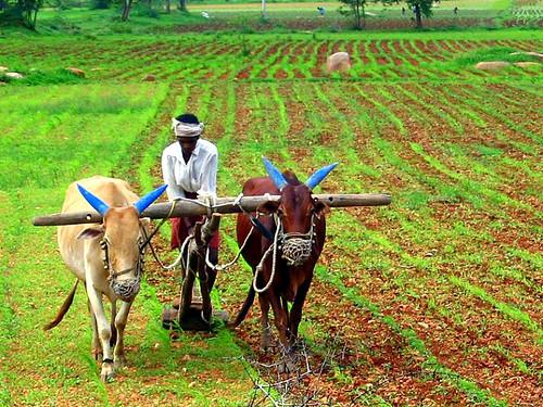 उत्तराखण्ड के बजट में कृषि और पानी पर भी ध्यान दिया गया