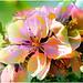 todays flowers by Sunnyvaledave