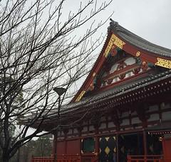 #life #travel #tokyo